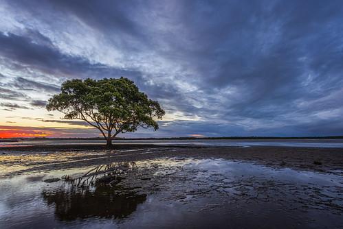 canon canoneosr canonef1740mm brighton brisbane queensland australia northpineriver bramblebay brightonpark brightonparkmangrove mangrove sunset reflection water mud cloud