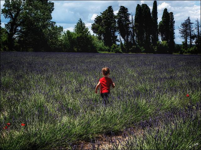 La petite fille et les coquelicots dans les lavandes / The little girl and the poppies in lavender