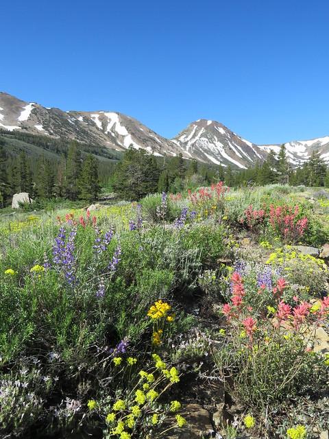 High Sierra Flora