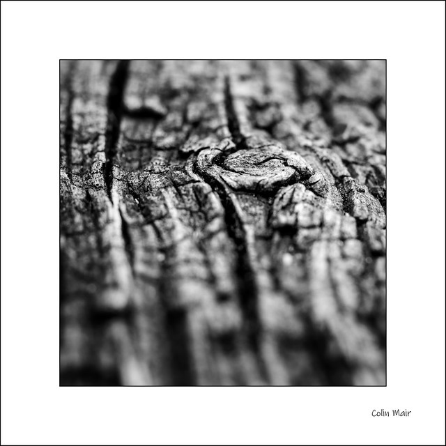 Grain - (Jupiter 8, 50mm, f8) - 2020-06-01st
