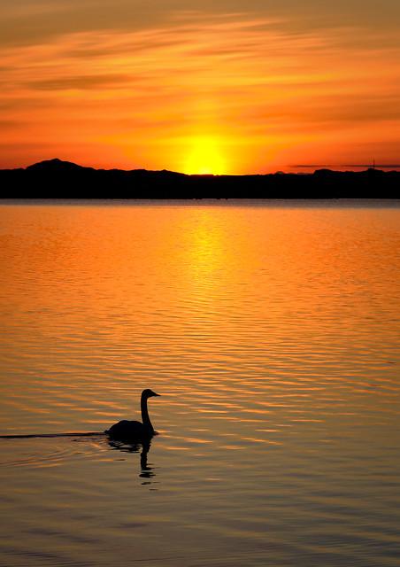 Sunrise swim, Norway