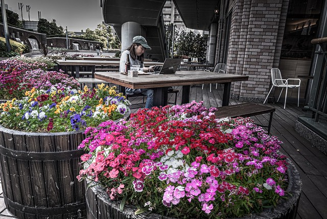 Flowers, beer and cafe