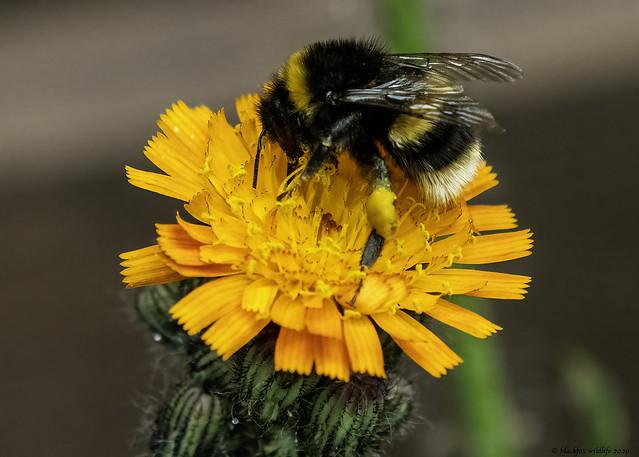bumble bee joy