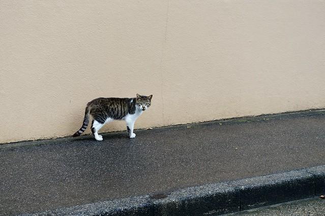Today's Cat@2020ー06ー11