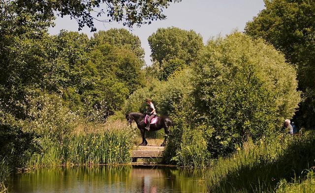 Horse and a Bridge