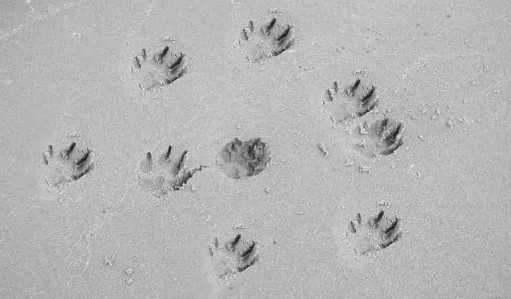 des-anciens-crocodiles-marchant-sur-deux-pattes
