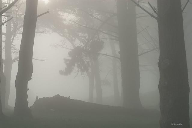 Niebla cerrada