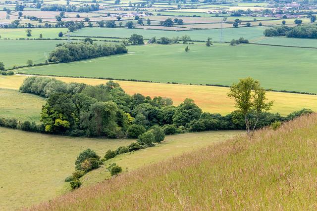 Wiltshire view