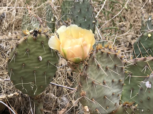 Flowering Cactus. From History Comes Alive on Moab's Hiking Trails