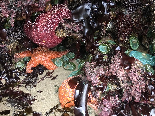 Marine Reserve BioBlitz 7/17/2018