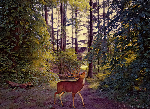 woods woodland forest deer talltrees branches leaves path trail outdoor adventure nature flora fauna animal atmosphere art artwork vivid colour