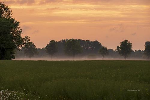 fog foggy nebel neblig bodennebel sommer summer spring frühling landscape allee strase sunset sunsetlight sundown sonnenuntergang light licht nature natur brinkum stuhrbrinkum niedersachsen nikond750 sigmaapo180mmf35d sigma