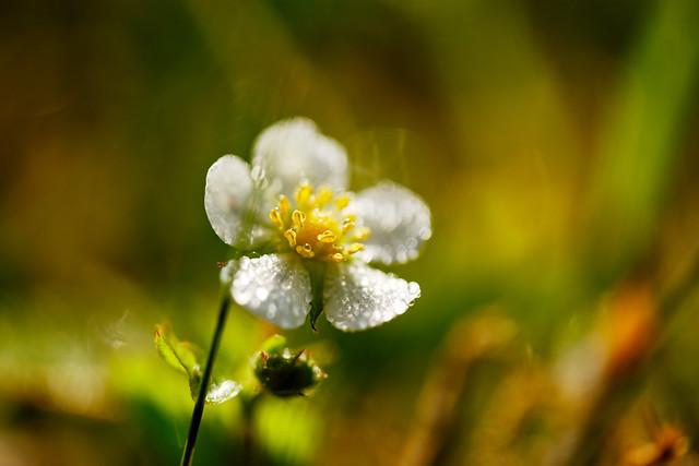 Glistening in the grass