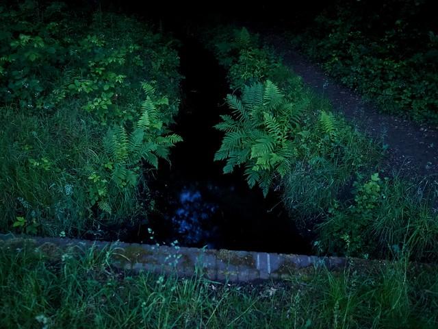 Nachtgrün