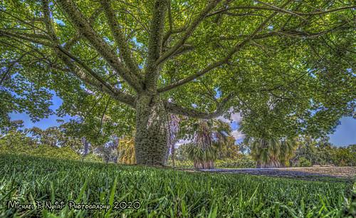 tree southerncalifornia southcoastbotanicgarden palosverdespeninsulacalifornia palosverdes nature garden