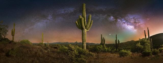 Sonoran Desert X