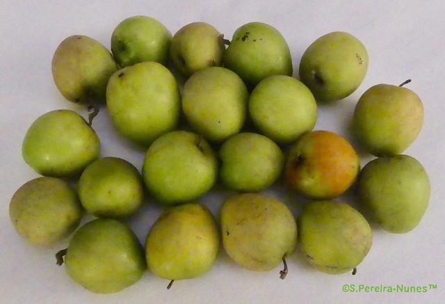 Delicious and Unique Olijf Fruit, Indian Jujube, Paramaribo, Suriname