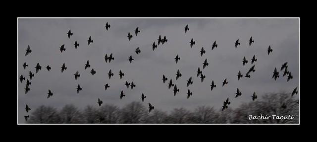 oiseaux -3