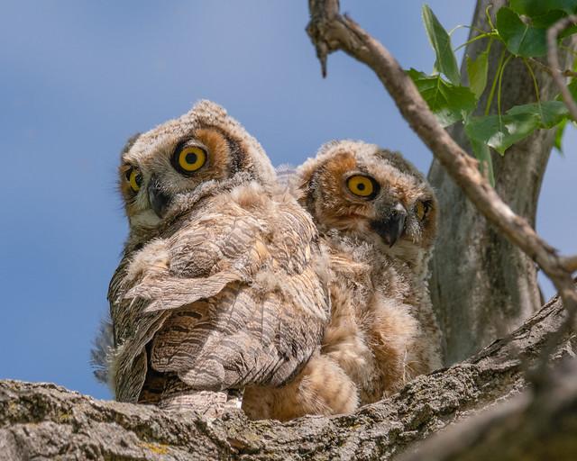 Big Eyes...