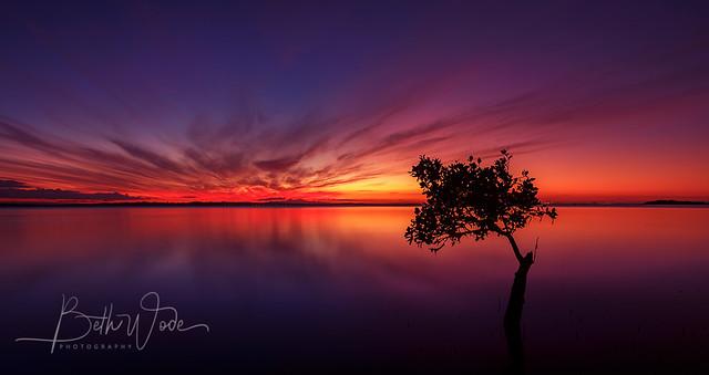 Mangrove Evening