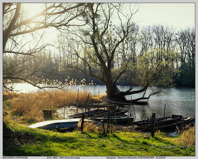 Barques , Reserve Naturelle d'OFFENDORF , ALSACE