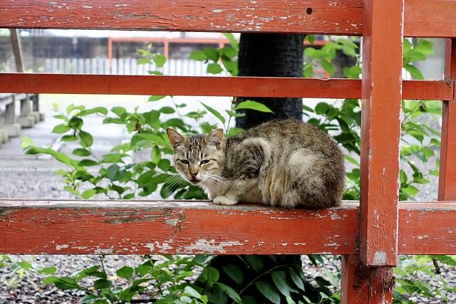 Today's Cat@2020ー06ー13