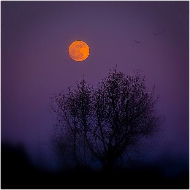 Un soir de lune Rousse