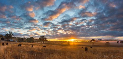 australia queensland morninglight sunrise rurallife warrillview