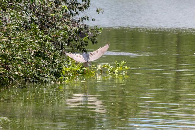 Ang Kaew Reservoir (88 sur 121)