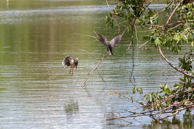 Ang Kaew Reservoir (80 sur 121)