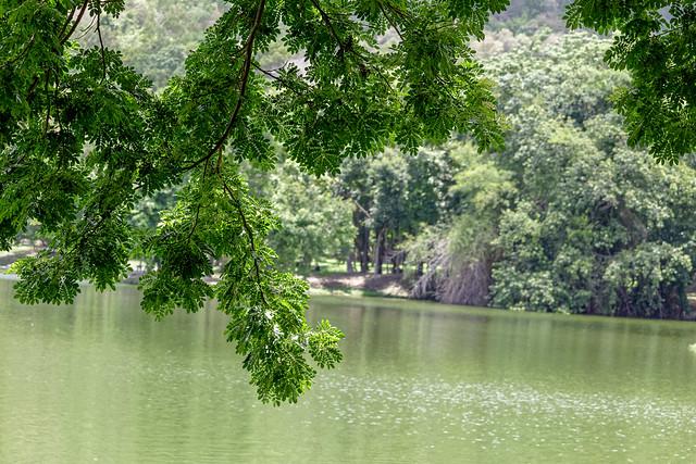 Ang Kaew Reservoir (27 sur 121)