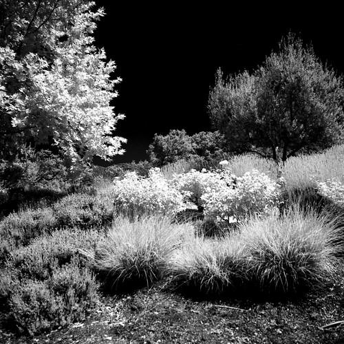 spectralgardendreamscape calistoga california kowasix kowa13555mmlens hoya67mminfraredr72filter rolleiir400film 6x6 120film mediumformat epsonperfectionv600 photoshopdigitalization