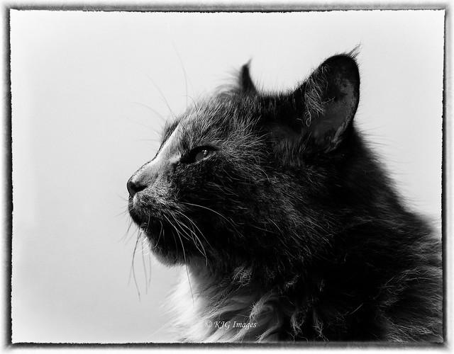 Portrait of Bella (Explored 14/06/2020)