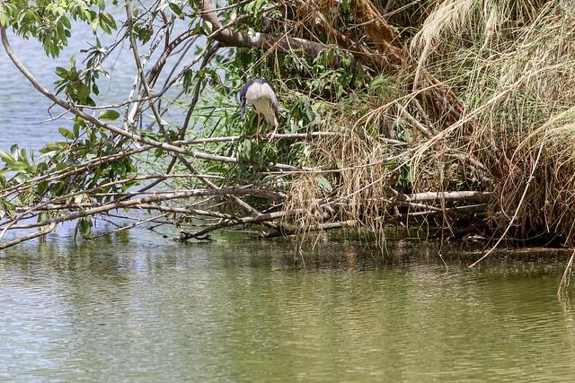 Ang Kaew Reservoir (63 sur 121)