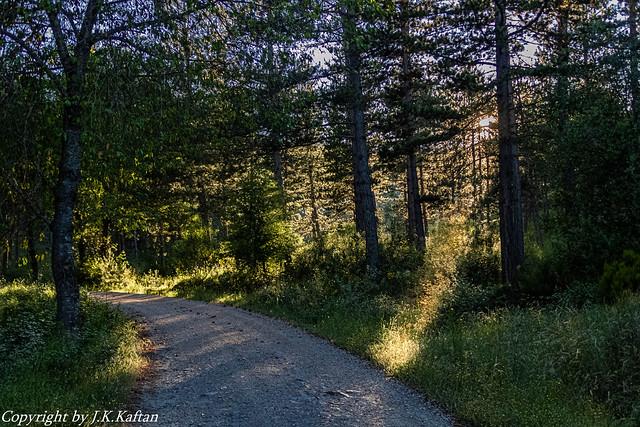 Walking through the Forest ...., Caminando por el Bosque....