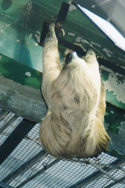 Smithsonian National Zoological Park - Sloth