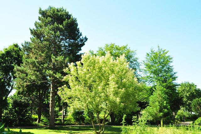 Juni 2020 ... Gemeindepark Edingen ... Brigitte Stolle
