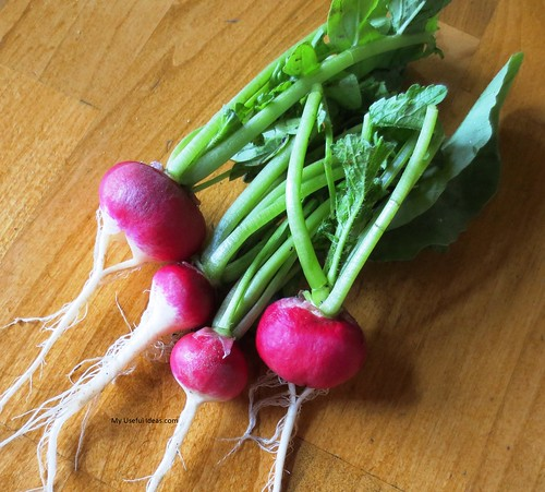 Sparkler White Tip Radishes