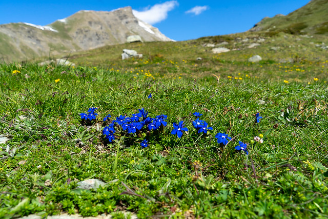 Pass dal Güglia: blue alpine spring (3/3)