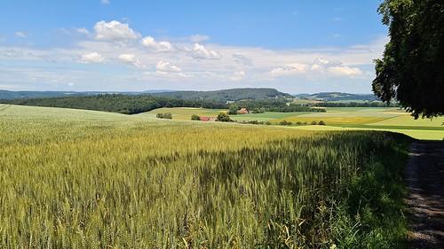 cantonofzurich switzerland landscape farm fields landschaft felder clouds forest wald 2020 june zürichunterland