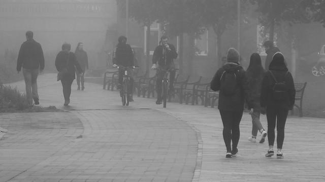 Misty Day 016