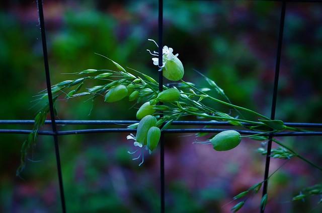 Mi piace il linguaggio della natura, un'armonia di colori, profumi, silenzio e... semplicità!