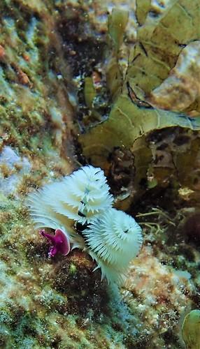 PM 24 NOV 2020 PADI Dive Photos