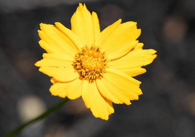 Wildflower in meadow
