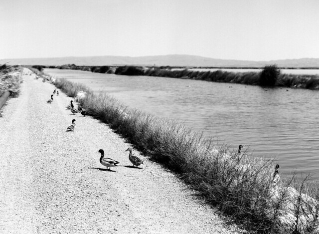 Sunnyvale Baylands, California (May 2012)
