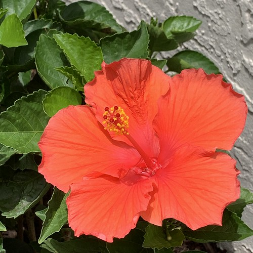 garden florida gulfcoast tropical
