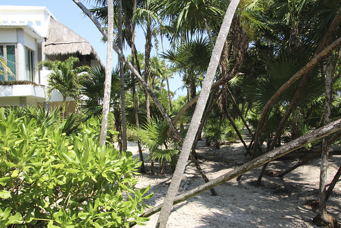 Area between ground floor suites and the beach, Valentin Imperial Riviera Maya, Mexico