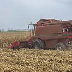 Maize HarvestColour_111