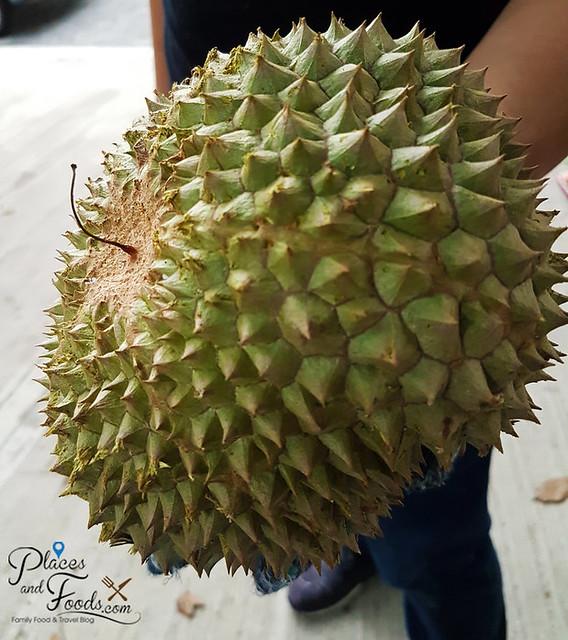 black thorn durian