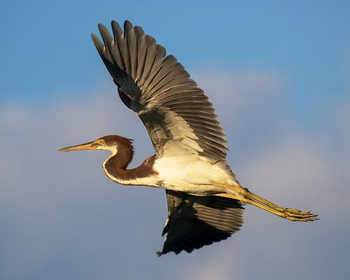 outdoor seaside dennis adair nature wildlife 7dm2 7d ii ef100400mm canon florida bird